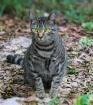 Grand Kitty Gizmo