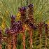 2Exploding Garden. - ID: 15580860 © Eric B. Stogner