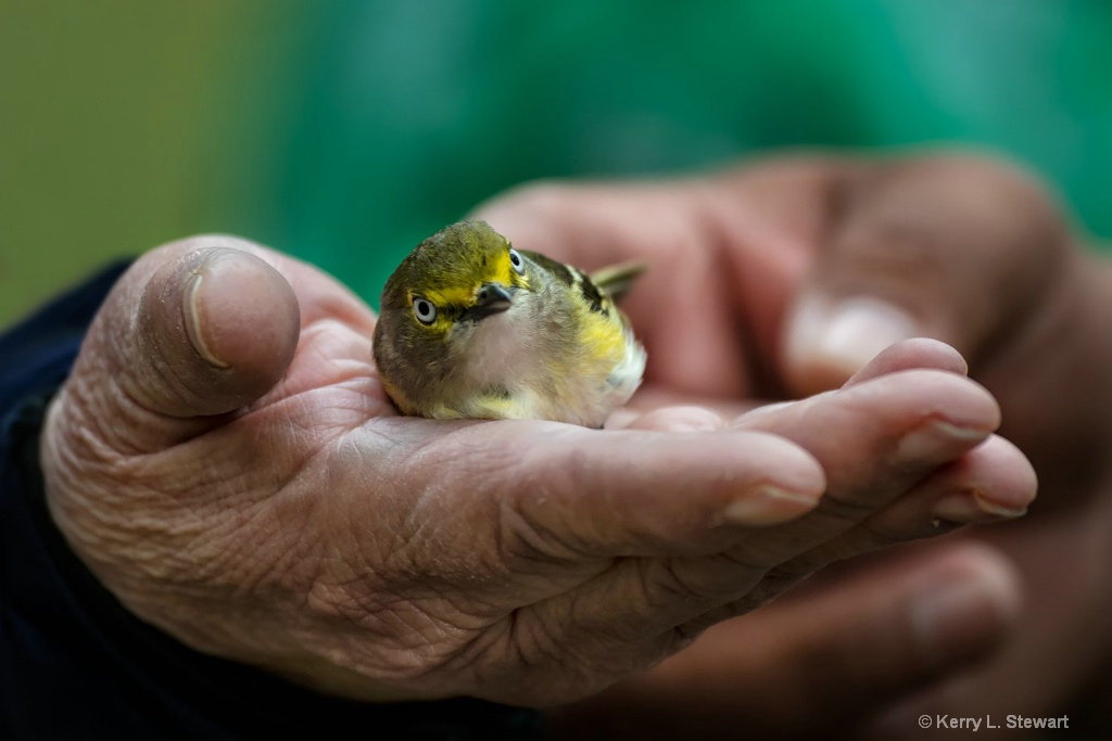 A Bird in the Hand... - ID: 15581782 © Kerry L. Stewart