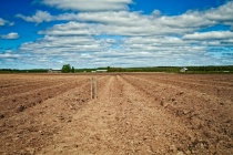 Mark On The Plowed Furrows