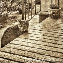 ~Neighbor's Kitty Visiting~
