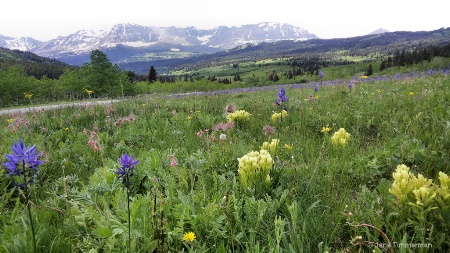 Spring - Rocky Mtn Front
