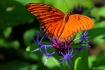 The Butterfly Hou...