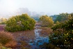 Misty Mangroves
