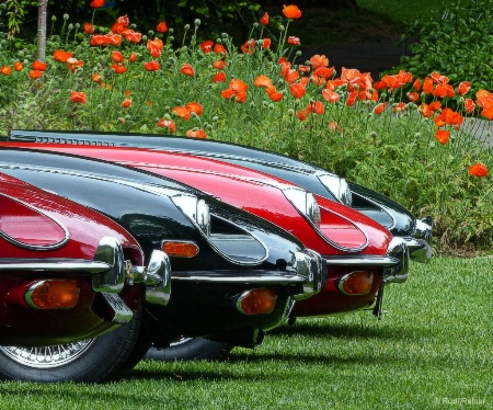 Jaguar E-Types align