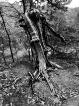 Rim Rock Wood