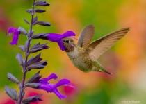 Sweet Nectar.