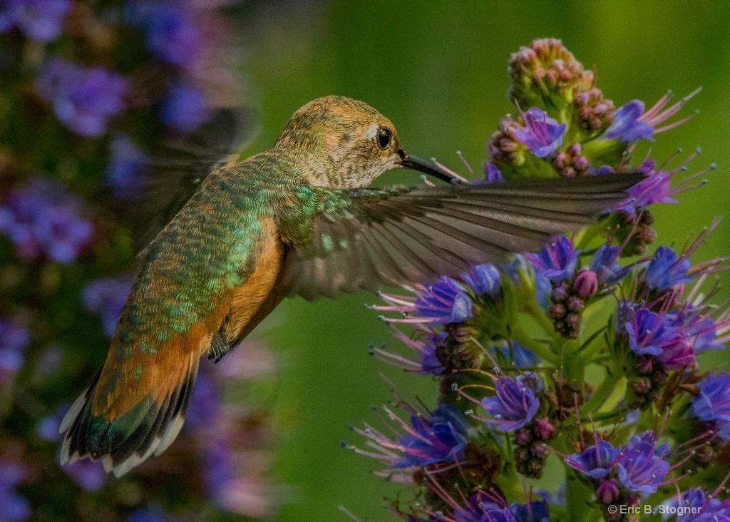 Nectar Harvest. - ID: 15588936 © Eric B. Stogner