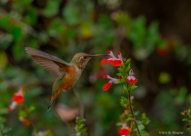 Pollinator.