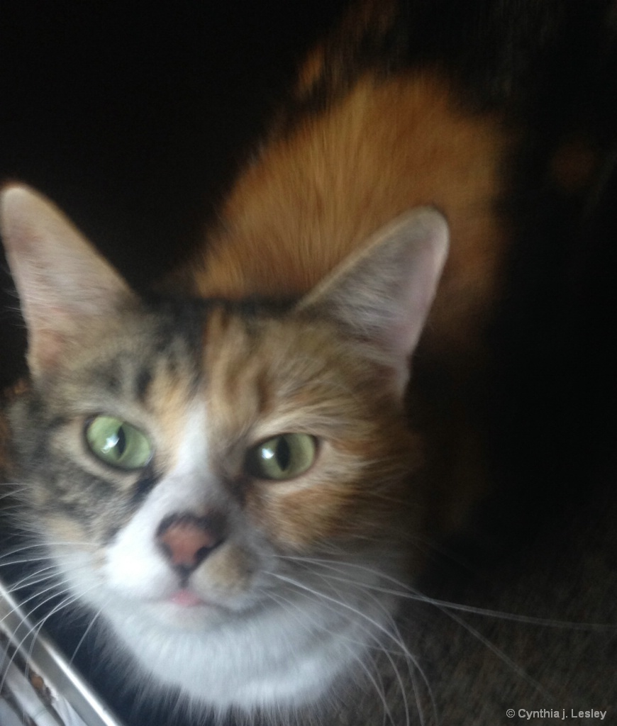 Missy my cat