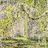 2Chapel of Ease, St. Helena Island, SC - ID: 15589136 © Fran  Bastress