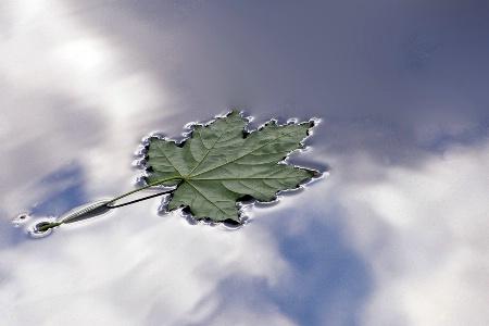 A Leaf Fell On The Sky