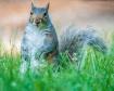 Momma Squirrel