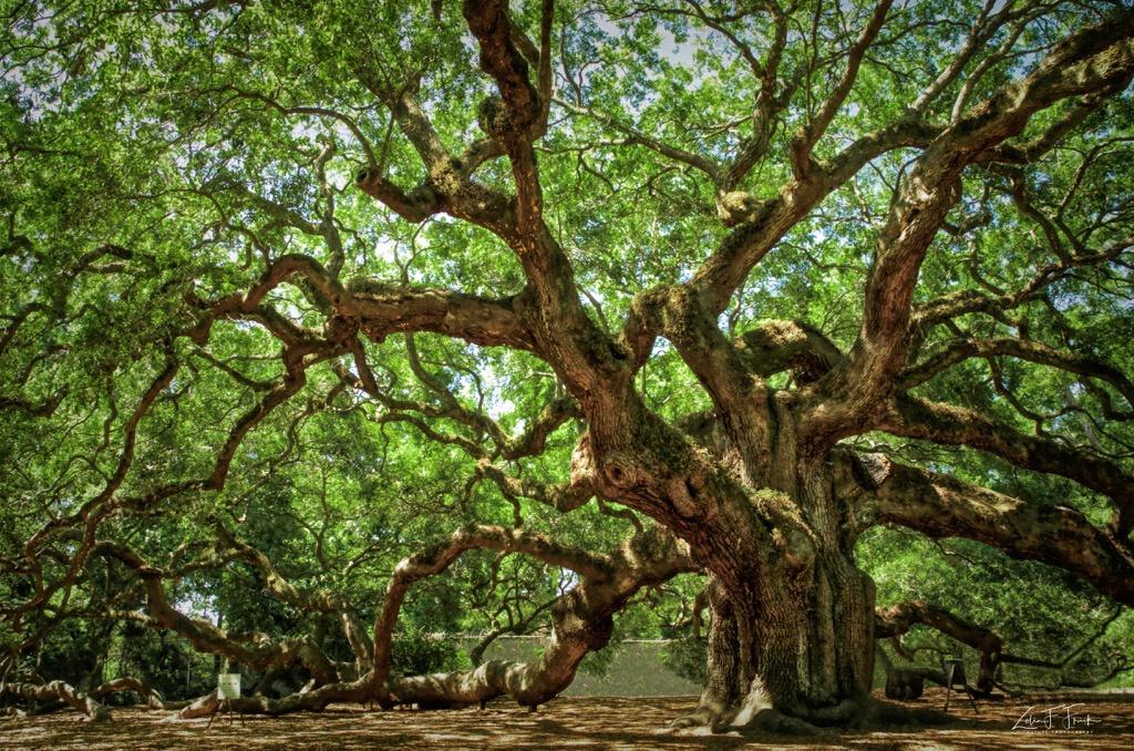 Angel Tree - ID: 15592211 © Zelia F. Frick