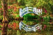 Magnolia Garden Swamp