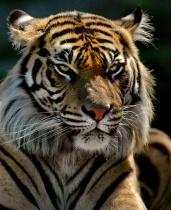 Elegant In His Stripes