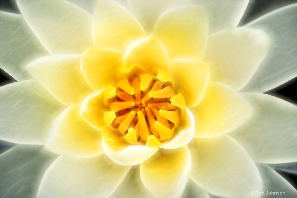 Artistic White-Yellow Lily 6-0 F LR 6-13-18 J011
