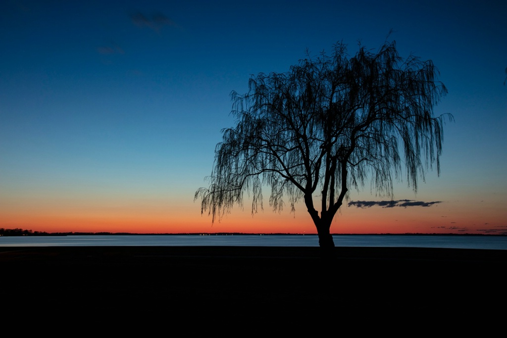 Willow at Sunset - ID: 15595154 © Dreaming Tree Galleries