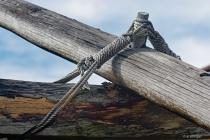 Tiller Pivot of a Polynesian Canoe DSC 1723 alamy