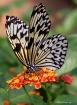 What a nectar !