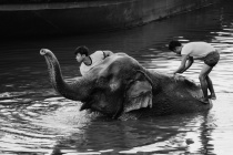 Bathing of an elephant.