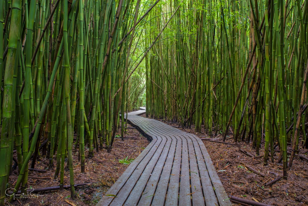 ~Bamboo Forest~