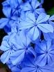 Flowers 184237