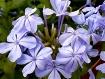 Flowers 184450