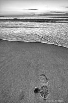 A footmark, A seashell