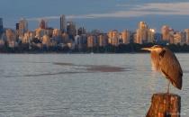 Evening city scape