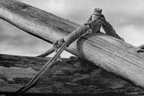 Tiller Pivot of a Polynesian Canoe DSC 1723-BW