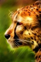 Artistic Profile of a Cheetah 6-0 F LR 5-6-18 J185
