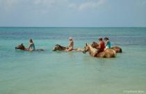 Pony Swim