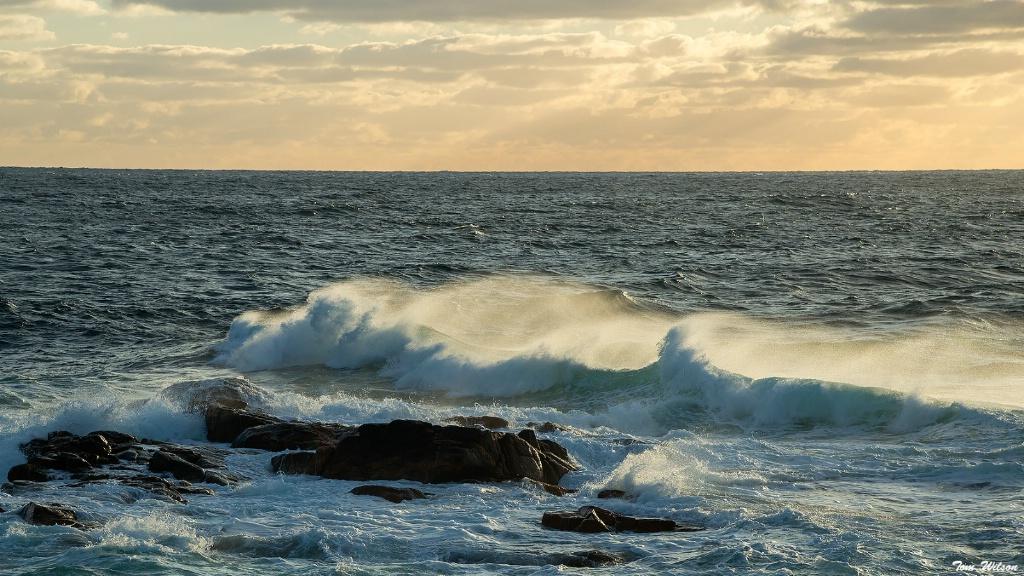 Wave, Niels Harbor - ID: 15612622 © Thomas R. Wilson