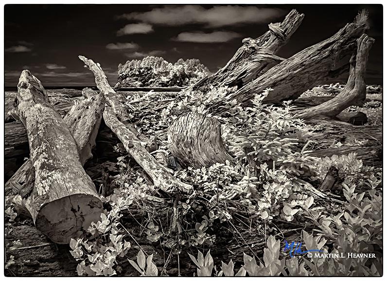 Bones of A-Ka-Lat, Quileute Beach, WA - ID: 15613692 © Martin L. Heavner
