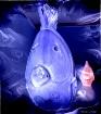 The Blues Fish