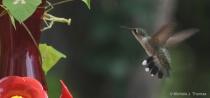 Preying Mantis Looking at Hummingbird