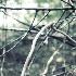 © Karen E. Michaels PhotoID # 15616196: muted branches