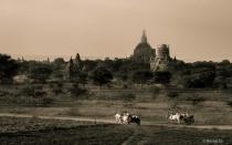 Good evening Bagan.