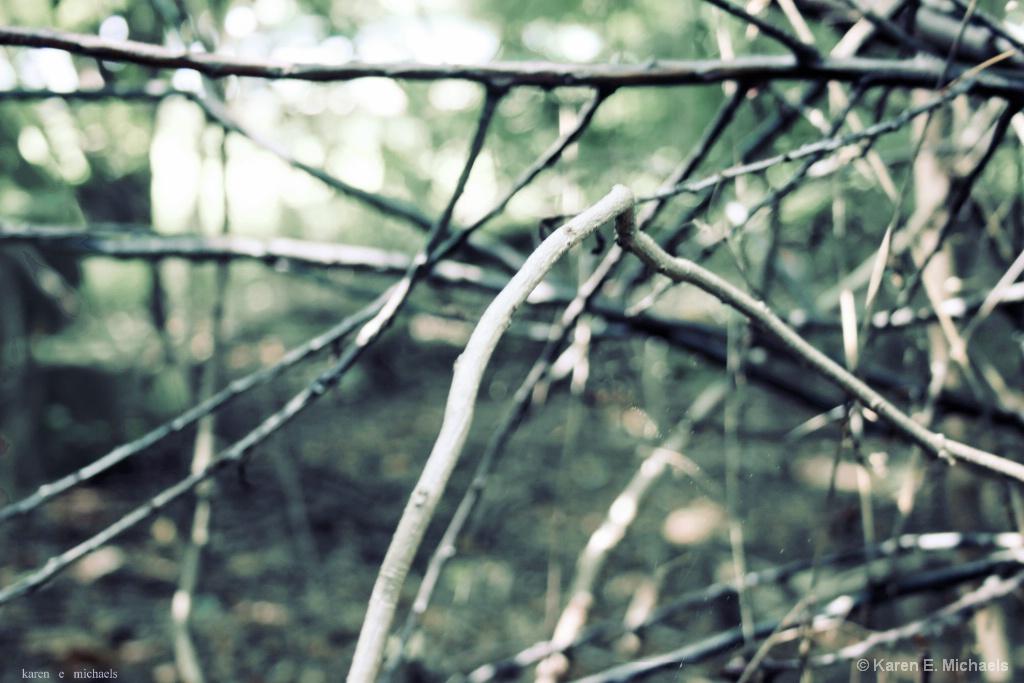 muted branches - ID: 15620200 © Karen E. Michaels
