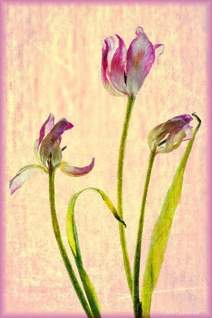 Dancing Tulips - ID: 15621785 © Ann Lyssenko