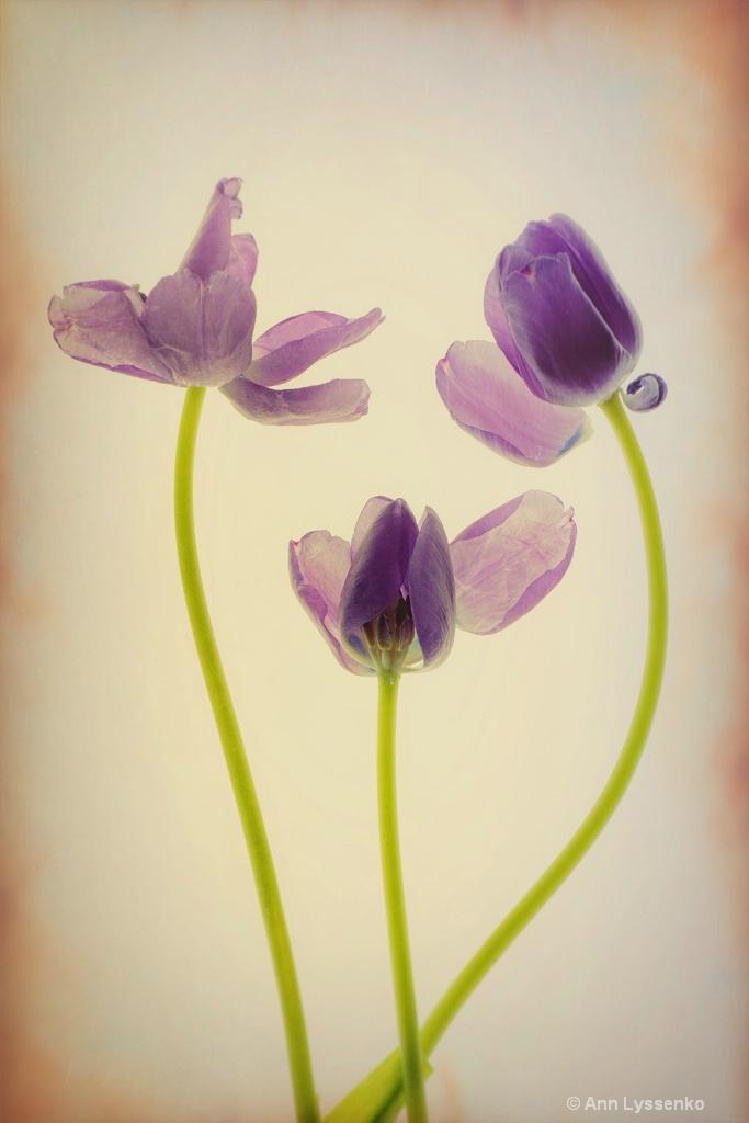 Heart Felt Tulips - ID: 15621791 © Ann Lyssenko