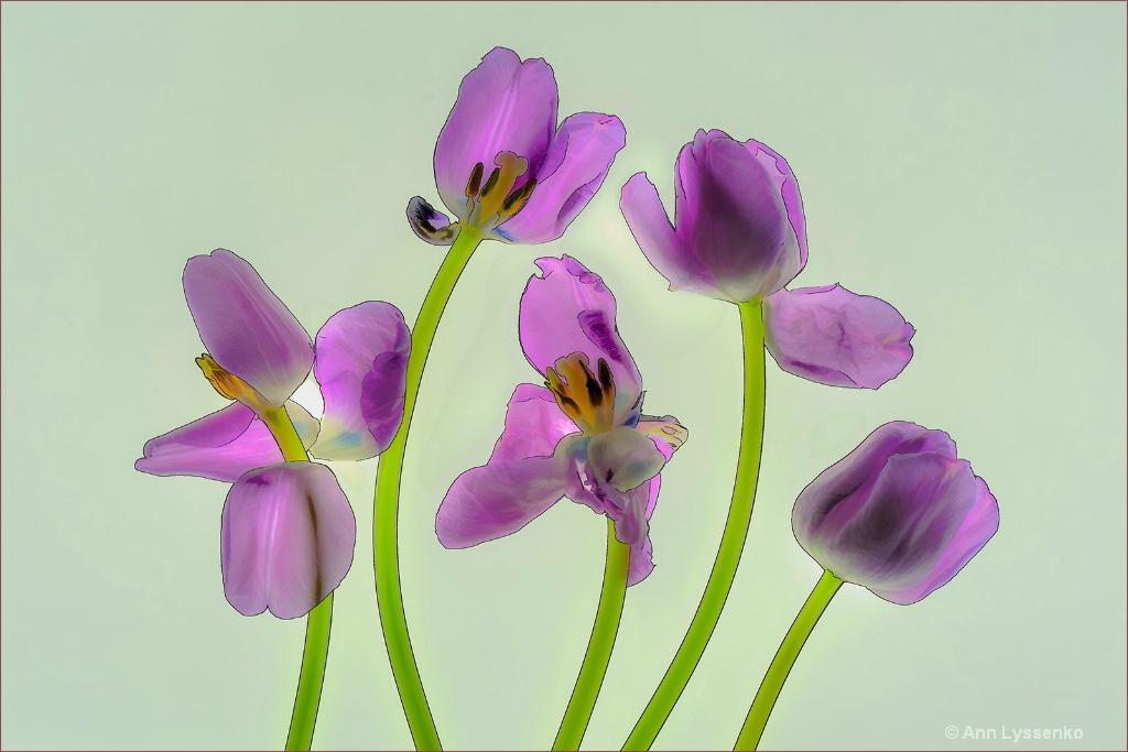 Purple Tulip Dance - ID: 15621794 © Ann Lyssenko