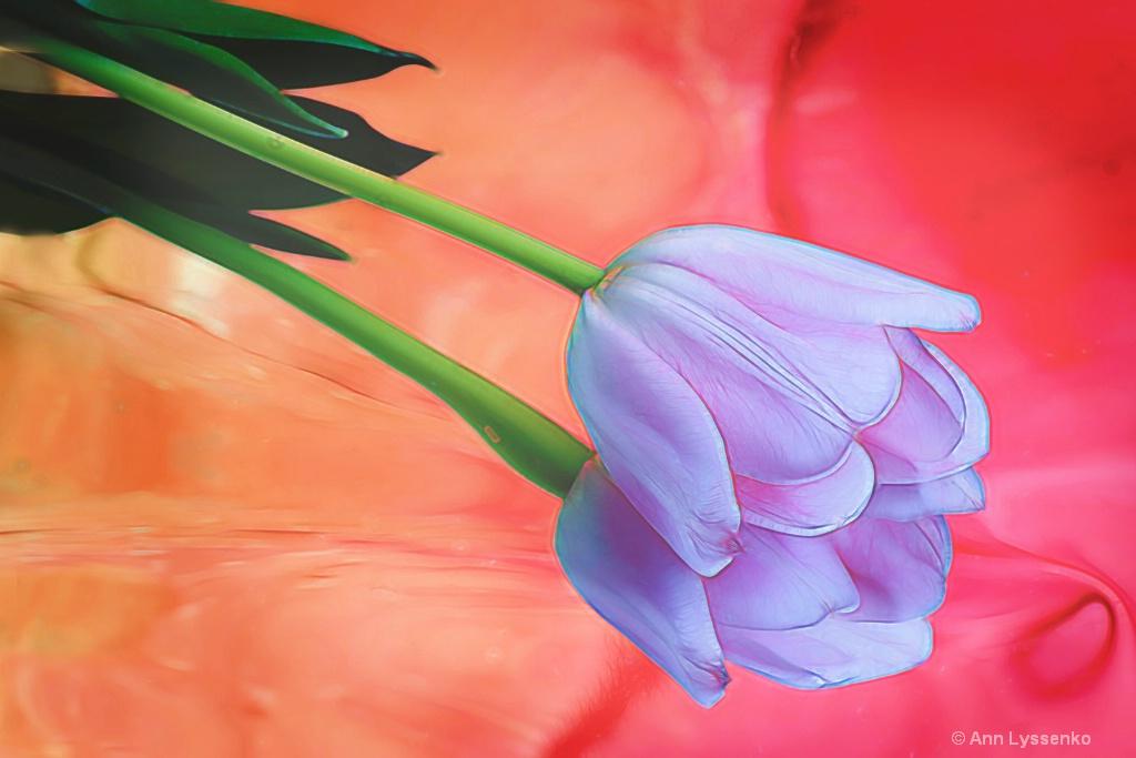 Rainbow Tulip - ID: 15621797 © Ann Lyssenko