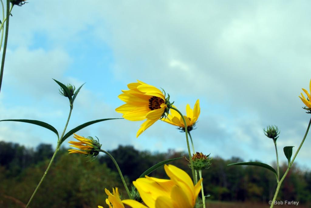 evansville yellow flowers