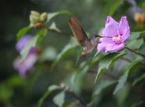 Another Hummingbird!