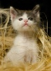 3 months old kitt...
