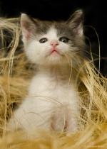 3 months old kitten