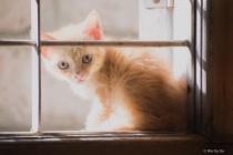 Kitten on the window.