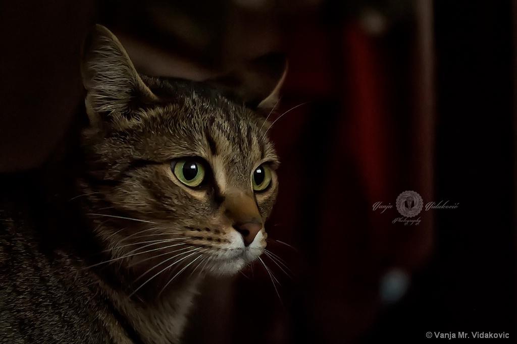 Bruno cat